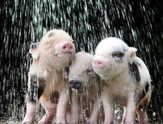 even in the rain these little guys seem to be smiling... :o)
