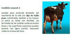 Manual de manejo y de alimentación de vacunos II: Manejo y Alimentación de vacas productoras de leche en sistemas intensivos