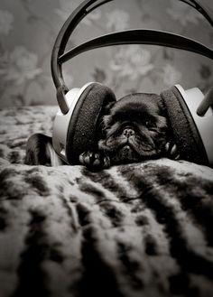 Pug jamming