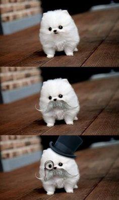 Funny dog :)