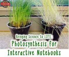Image result for photosynthesis activity