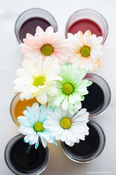 Color Changing Flowers Science Real Flowers, Colorful Flowers, White Flowers, Water Science Experiments, Science For Kids, Purple Food Coloring, Different Types Of Flowers, Small Mason Jars, Food Dye