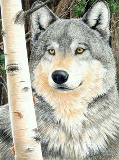 Wolf by Kathy Goff Beautiful Wolves, Animals Beautiful, Cute Animals, Beautiful Artwork, Wolf Spirit, Spirit Animal, Animal Paintings, Animal Drawings, Wolf Drawings