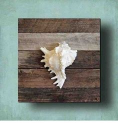 White Murex on Driftwood Panel - Cottage and Bungalow