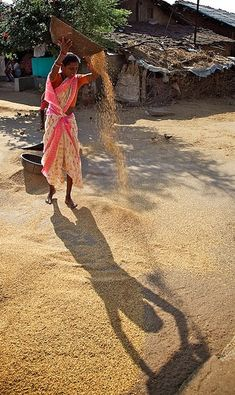 Winnowing rice after the harvest, Maharashtra, India Village Photography, World Photography, Street Photography, New Delhi, Village Photos, Amazing India, Rural India, Indian Colours, Indian Village