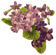 Violets:    http://lilac-n-lavender.blogspot.com/2012/03/sweet-violets-stationery.html  ...  http://lilac-n-lavender.blogspot.com/2012/04/vintage-facebook-timeline.html