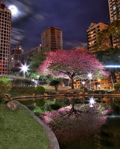 Japan's Square - Curitiba. Shot and HDR processing by Fabio Riesemberg.