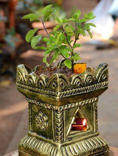 Potted Tulsi Plant for Worship, Maa Thulasi Plant, Indian Garden, Pooja Room Door Design, Lord Krishna Wallpapers, Lord Shiva Painting, Puja Room, Diwali Decorations, Indian Home Decor, Mural Art