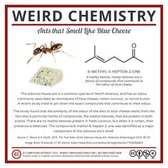 This week's #WeirdChemistry looks at ants that smell like blue cheese!(Weird…
