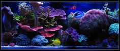 My 1 yr old mix reef - Now ~3 yrs old - Page 4 - Reef Central Online Community