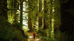 A hiker on a trail in the rainforest in Olympic national forest Best Family Vacation Spots, Family Resorts, Crater Lake National Park, Yosemite National Park, Olympia National Park, West Coast Road Trip, California National Parks, Park Service, Washington State