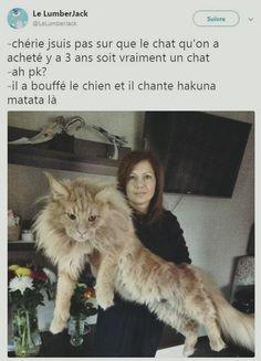 Chérie je suis pas sur que le #chat qu'on a acheté y'a 3 #ans soit vraiment un chat ! à #pourquoi ? il a bouffé le #chien et il #chante hakuna matata là