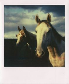 They love the sunset by Joep_polaroidfreak_, via Flickr