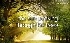 sun peeking through trees. i can feel the warmth just thinking about it. This pin is to save the original link for future inspirational use.