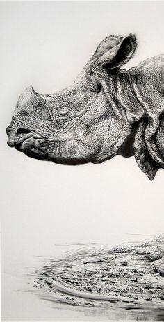 Rick Shaefer, Rhino 2012, charcoal on vellum
