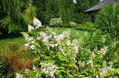 Ogrod W Cieniu Brzoz Rabata Poludniowa Czyli Melanz Hortensji Traw I Roz Garden Plants Herbs
