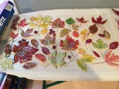 A woman collects leaves from her yard—look at her gorgeous idea for your front door!