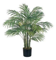 houseplants use a $10 houseplant from Homedepot for the HIGH in an outdoor pot.