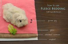 How to use fleece bedding in your guinea pig's cage