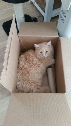 Playing with the box is fun!