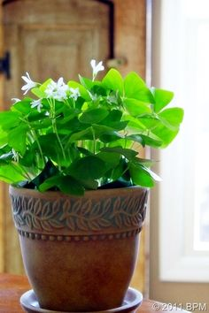 MARCH...Celebrating St. Patrick....Pick up a pretty little pot of Irish Shamrocks from your greengrocer for your desk at work--or any spot where you'll enjoy them.