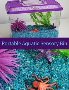 A is for Aquatic Portable Sensory Bin | eager Ed
