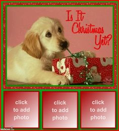CHRISTMAS PUPPY DOG PICTURE FRAMES