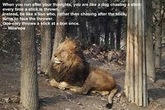 Image result for be like the lion stick dog