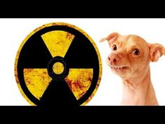 Nukleární fofola - YouTube Fun Stuff, Youtube, Movie Posters, Movies, Fun Things, Films, Film Poster, Cinema, Movie