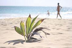 Strand Las Salines auf Martinique (Karibik)