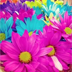 70 Best Colorful Flowers Images Beautiful Flowers Planting