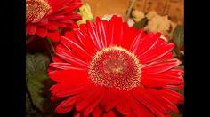 Flores - Beleza da Mãe Natureza