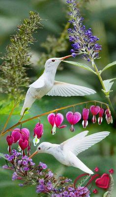 Beautiful birds, ,abstract birds, birds, bird k… - Animal All Birds, Little Birds, Love Birds, Angry Birds, Pretty Birds, Beautiful Birds, Animals Beautiful, Exotic Birds, Colorful Birds