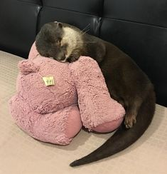 Baby Face Cartel - A baby asian small clawed otter Cute Baby Animals, Animals And Pets, Funny Animals, Wild Animals, Photo Animaliere, Baby Otters, Otters Cute, Tier Fotos, Cute Creatures