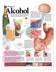 Dangers of Alcohol Chart - Alcholol Education Poster - AnatomyStuff