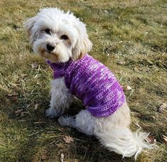 custom dog sweater dachshund clothes whippet sweater yorkie clothes pug sweater small dog clothes teacup dog clothes dog sweater