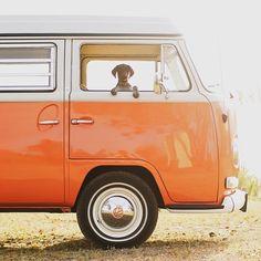 vw camper van T2 complete with dog! Partner in crime. Photo by @rodtrvn