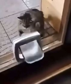 Funny Cute Cats, Funny Animal Jokes, Cute Baby Cats, Cute Little Animals, Funny Cat Videos, Cute Funny Animals, Funny Animal Pictures, Kittens Cutest, Photo Chat
