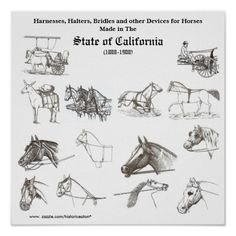Harnesses & halters made in Califo... - Customized Posters