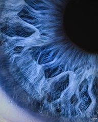 Blue human eye • photography macro