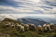 Oh sheep!! An excursion in Col Visentin (Vittorio Veneto)