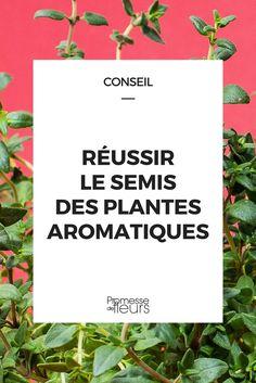Semer les plantes aromatiques : nos conseils !