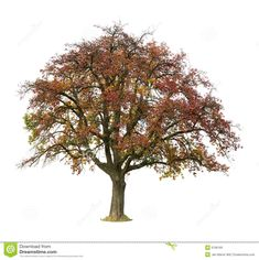isolated fall trees - Google Search