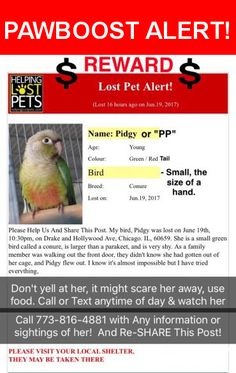 "Please spread the word! Pidgy was last seen in Chicago, IL 60659.  Message from Owner: REWARD! PLEASE HELP.  LOST BIRD/CONURE CHICAGO, IL. 60659    Please Help And Share This Post.  My bird, ""Pidgy"" escaped on June 19th, 10:30pm, at Drake and Hollywood Ave, Chicago. IL, 60659. She is a small green bird with a red tail and is called a Green Cheek Conure, its larger than a parakeet, and she gives off a loud high-pitch chirp.    As a family member was walking out the front door, they didn't…"