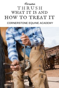 Thrush is a very common fungal infection that attacks the bottom of the hoof. Left untreated it can be very dangerous, but luckily there are easy ways to prevent, and treat thrush in horses. Western Horse Tack, Western Riding, Western Saddles, Horse Training Tips, Horse Tips, Barrel Racing Quotes, Natural Horsemanship, Horse Grooming, Riding Lessons