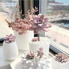 60 Gorgeous DIY Succulent Fairy Garden Ideas These trendy Succulents ideas would gain you amazing compliments. Check out our gallery for more ideas these are trendy this year. Pink Succulent, Succulent Pots, Cacti And Succulents, Planting Succulents, Planting Flowers, Suculentas Diy, Cactus Y Suculentas, Terrarium Cactus, Best Decor