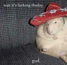 - ̗̀ saith my he A rt ̖́- Stupid Memes, Dankest Memes, Funny Memes, Quality Memes, Cursed Images, Wholesome Memes, Mood Pics, Haha Funny, Funny Rats