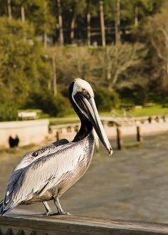 Fairhope, Alabama public pier