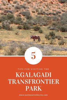 The Kgalagadi Transfrontier Park is famous for it's red sand dunes, black maned lions and exceptional wildlife photography opportunities. If you are planning to visit the park, here are some tips before you go. Provinces Of South Africa, Camping Spots, Africa Travel, Travel Photographer, Wildlife Photography, Travel Inspiration, Safari, How To Memorize Things, National Parks