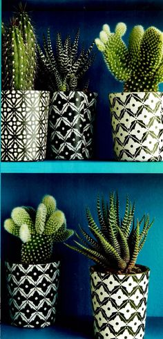 Succulents + cacti + bold prints are the perfect combination